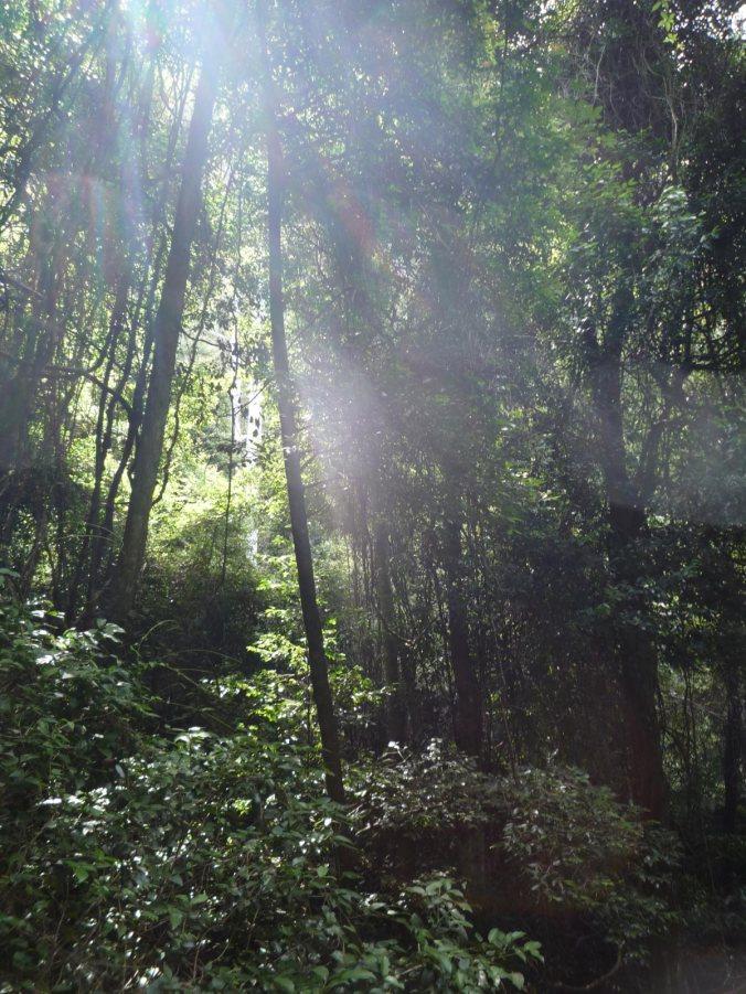 Blue Mountains sun light