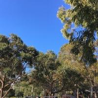 Trees in Pioneer Park