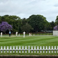 Cricket and Jacarandas