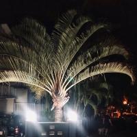 Palm drama