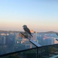 Birdseye view